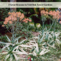 3 Great Reasons to Visit Bok Tower Gardens